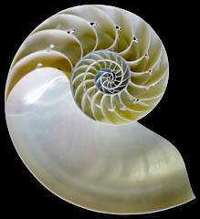 spiral31
